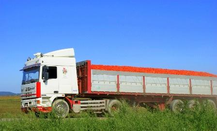 Camiões de tomate já podem transportar mais peso, mas….