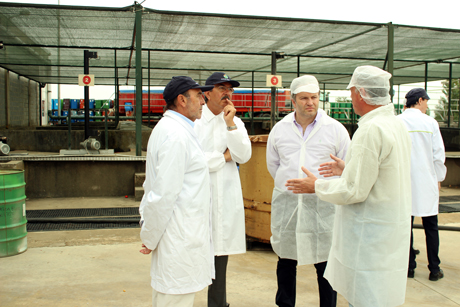 Ano de maior produção de tomate da história. Pedro Ribeiro visita Compal (VIDEO)