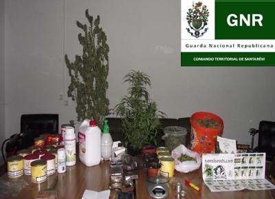 Droga e cães apanhados pela GNR