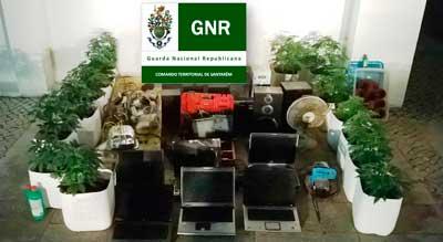 Mais uma estufa de cannabis apanhada no concelho. Jovem fica em liberdade